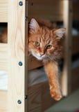 Den röda katten ligger på en säng Royaltyfria Foton