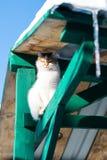 Den röda katten på går i vintern i byn royaltyfri bild