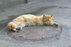 Den röda katten på vilar Royaltyfria Bilder