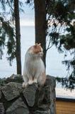 Den röda katten sitter på en bakgrund av havet Arkivbild