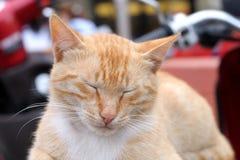 Den röda katten sover på sparkcykeln Royaltyfri Foto