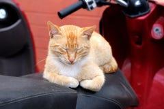 Den röda katten sover på sparkcykelplatsen Arkivfoto