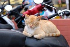 Den röda katten sover på sparkcykelplatsen Arkivbilder