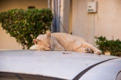 Den röda katten sover på taket av bilen royaltyfri foto