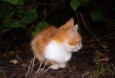 Den röda kattungen kröp ihop under en buske Arkivfoto