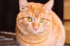 Den röda manliga katten sitter in mot kamera utanför arkivfoton