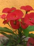 Den röda naturen Arkivfoto