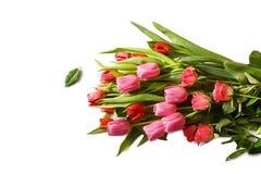 Den röda och rosa buketten av den nya vårtulpan och rosor blommar Arkivfoto