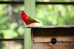 Den röda papegojan perched på ett fågelhus royaltyfria foton