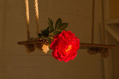 Den röda pionblomman ligger på en gunga royaltyfria foton