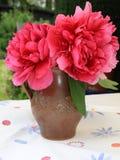 Den röda pionen blommar i en vas Royaltyfri Foto