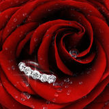 Den röda ron med diamanten ringer closeupen Royaltyfri Bild