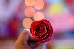Den röda rosa blomman är ett symbol av förälskelse och optimism arkivbilder
