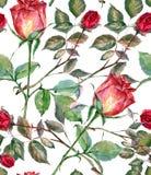 Den röda rosen, vattenfärg, mönstrar sömlöst Royaltyfri Fotografi