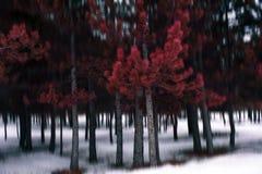 Den röda skogen arkivbild