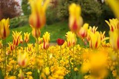 Den röda speciala blomman Royaltyfri Bild