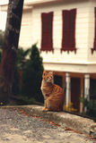 Den röda strimmig kattkatten sitter på trottoarkant Arkivbild
