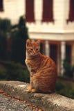 Den röda strimmig kattkatten sitter på trottoarkant Royaltyfri Bild