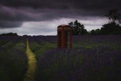 Den röda telefonasken i lavendelfält som regn häller ner royaltyfri fotografi