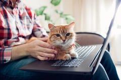 Den r?da katten sitter p? h?nderna av en freelancer n?ra b?rbara datorn arkivbild