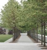 Den raka vägen med ordnar raka träd, Roosevelt Island, New York Arkivbilder
