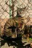 Den randiga katten Arkivfoto