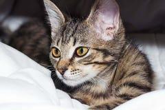 Den randiga katten ligger på en pläd Royaltyfri Fotografi