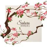 Den realistiska sakura Japan körsbärsröda filialen med att blomma blommar vektorillustrationen Arkivbild