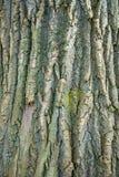 Den red ut trädstammen texturerade bakgrundsfotoet, bild arkivfoton