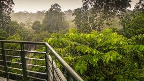 Den regniga dagen i rainforest, går wiew från markisen tornet i Sepilok, Borneo Fotografering för Bildbyråer