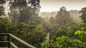 Den regniga dagen i rainforest, går wiew från markisen tornet i Sepilok, Borneo Arkivbilder