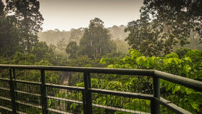 Den regniga dagen i rainforest, går wiew från markisen tornet i Sepilok, Borneo Royaltyfri Foto