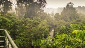 Den regniga dagen i rainforest, går wiew från markisen tornet i Sepilok, Borneo Arkivfoto
