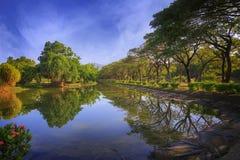 Den rena reflexionen Fotografering för Bildbyråer