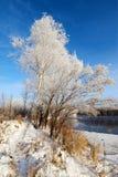 Den rena vita mjuka rimfrosten Royaltyfri Fotografi