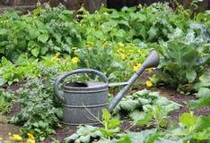 Den Retro grönsakträdgården, zink som bevattnar kan royaltyfri fotografi