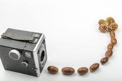 Den Retro kameran med ekollonar och sörjer kottar fotografering för bildbyråer