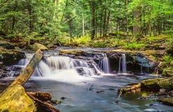 Den Ricketts dalgången härbärgerar naturligt område för dalgångar royaltyfri fotografi