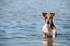 Den rimmade hunden Royaltyfri Foto