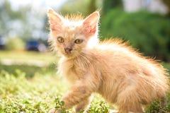 Den rinnande näsan för kattunge som söker efter mat i en vad Royaltyfria Foton