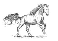 Den rinnande snabbt växande vita hästen skissar ståenden Arkivbild
