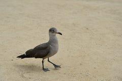 Den roliga fågeln går på sanden Arkivbild