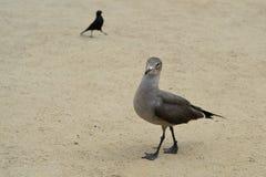 Den roliga fågeln går på sanden Royaltyfri Bild