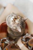 Den roliga katten ber ett mellanmål Arkivbilder