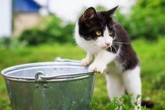 Den roliga kattungen går i sommarträdgården och ser nyfiket in i royaltyfri fotografi