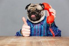 Den roliga mopshunden med mannen räcker samtal på telefonen Arkivbild