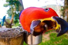 Den roliga papegojan biter en kamera Arkivbilder