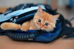 Den roliga röda kattungen i en ryggsäck med lekar för fotografisk utrustning ser sitta royaltyfria bilder