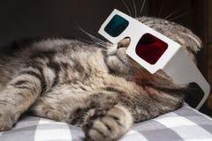 Den roliga skotska veckkatten bar exponeringsglas 3D och att hålla ögonen på en film på televisionuppsättningen fotografering för bildbyråer