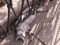 Den roliga strimmig kattkatten rullade över royaltyfria bilder